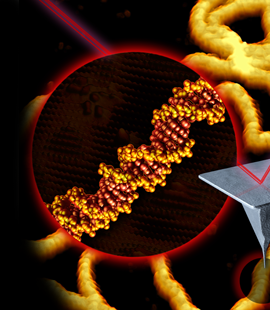Hoogenboom atomic force microscopy DNA